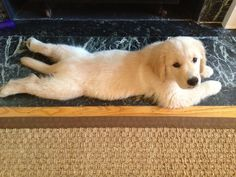 Look at me, I'm a floor rug!