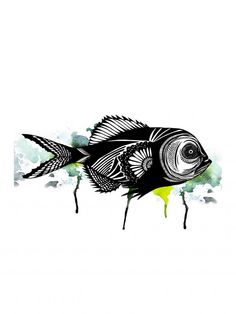 fish + illustration