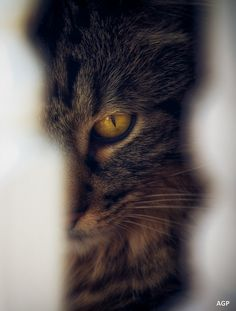 """""""Cats come and go without ever leaving."""" --Martha Curtis"""