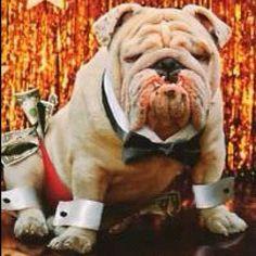 Channing Tatum of Bulldogs...  #Padgram