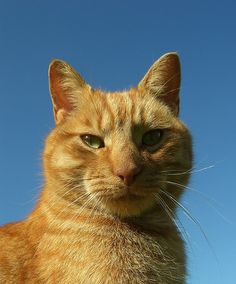 Cat and blue sky   Must Have Dog & Cat Coverage! http://www.1800petsandvets.com/petplan-pet-insurance-1800petsandvets/