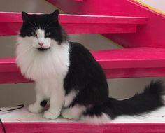 Sort hvit hannkatt savnet i Rådal Hordaland. (link: http://dyrebar.no/71466/) dyrebar.no/71466/ #katt #savnet  Sort hvit hannkatt savnet i Bergen  Publisert 21.12.2017 09:46