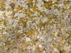 Los colores de la naturaleza sobre la piedra