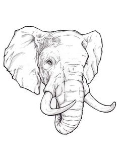 ideas for tattoo elephant sketch pencil drawings Elephant Head Drawing, Elephant Sketch, Elephant Eye, Elephant Drawings, African Elephant, Elefante Tribal, Elefante Tattoo, Elephant Tattoo Design, Elephant Tattoos