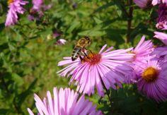 Nektár – a méznél is édesebb folyadék Plants, Plant, Planets