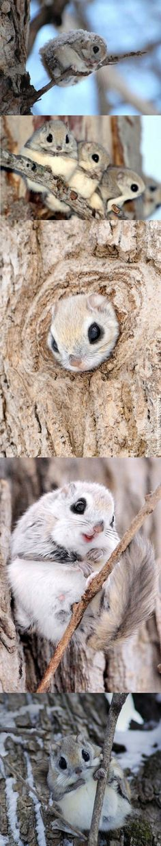 Cute Japanese Flying Squirrels Click to comment, vote and smile : )