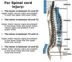 Spinal cord injury chart