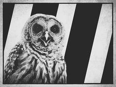 barred-life-owl-stripes-declan-travis