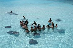 Stingray City, Grand Cayman Islands.  The Cayman Islands are BEAUTIFUL!!! While we were there we went to Stingray City. You take a small boat to the reef and you swim with thousands of stingrays. I was terrified because just a few days before the Crocodile Hunter had just been killed by one but you only live once! I'd definitely go back.