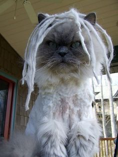 Maybe I'll just get my cat dreads.  AHHHH...