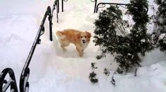 Scooter's Snow Day! | The Animal Rescue Site Blog