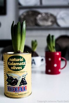 old tins and cups make great flower pots!