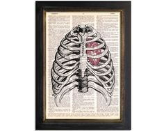 The Sternum and Heart  Anatomy Diagram Art by VintageDictionaryArt, $9.00