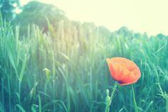 Poppy- http://charleycreative.com/all-photos/