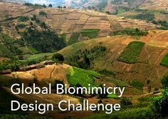 Global Biomimicry Design Challenge: Food Security