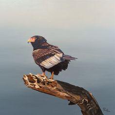 Oil painting on canvas depicting the Bateleur Eagle. Follow @tessreidart on Instagram and Facebook. Eagle Artwork, Bird Artwork, Birds Of Prey, Oil Painting On Canvas, Bald Eagle, African, Watercolor, Fine Art, Facebook