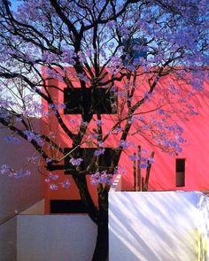Transported by this architecture color and tree. Casa Giraldi by Luis Barragan. #interiordesign #architecture #instadecor #instagood #interiors #designhistory #designerfurniture #midcenturymodern #homedecor #interiordesigner #design #adstyle #elledecor #architecturelovers #interiors #instadecor #decorlovers #instaluxe #vogueliving #moderndesign #interiordetails #midcentury #architecturephotography #architect #mexico #colors #pink #landscapephotography #landscapearchitecture #landscapedesign