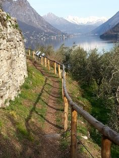 Olive trail from Gandria to Lugano