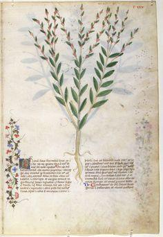 On Plants - World Digital Library