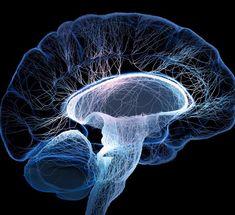 Экология жизни. Здоровье: В этой статье я попытаюсь детально и в то же время с позиций целостности описать все процессы, которые протекают в мозге человека при вегетативной дисфункции