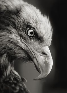 Eagle study (video), Jesse Keisala on ArtStation at https://www.artstation.com/artwork/eagle-study-video