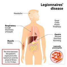 Legionella bacteria trigger pneumonia, which is inflammation of the lungs. This causes a high fever, chills, coughing and muscle aches. Las Vegas Strip Hotels, Walking Pneumonia, High Fever, Neck And Back Pain, Respiratory System, Health Department, Muscle, Atypical, Lungs