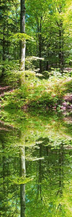 'Reflections of Spring' - by artist John Stuart Webbstock (Mississauga, Canada)