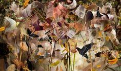 "Saatchi Art Artist Ysabel LeMay; Photography, ""THE PATH / edition 1/7"" #art"
