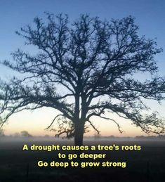 Let your roots grow down into Him, and let your lives be built on Him. Then your faith will grow strong in the truth you were taught, and you will overflow with thankfulness. Colossians 2:7 NLT