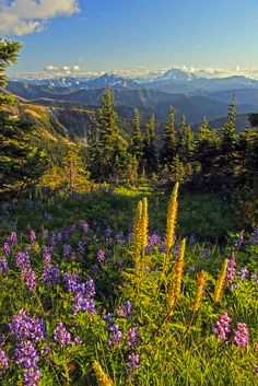 Lakeview Ridge, in the Pasayten Wilderness, along the #Pacific_Crest_Trail and the Pacific Northwest Trail.