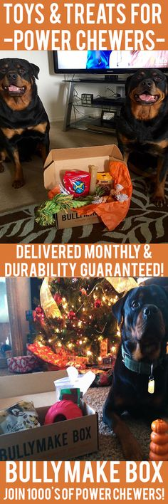 Is your dog a POWER CHEWER? Get DURABLE toys and DELICIOUS treats delivered monthly! All toys guaranteed 14 days or we replace them for free. See here: https://bullymake.com/?utm_source=pinterest&utm_medium=pinterest-ads&utm_term=rot-jan10&utm_content=rot-jan10
