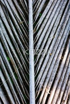 Vertical Dead Palm Leaf - A vertical photo of a dead palm leaf lying on the ground in Coonoor, India.