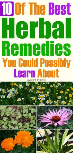 10 Of The Best Herbal Remedies You Could Possibly Learn About - Off-Grid Herbal Remedies, Home Remedies, Safety Topics, Surviving In The Wild, Garden Solutions, Hobby Farms, Medicinal Plants, Survival Tips, Natural Living