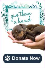 Humane Society of San Antonio - Grant For: Satellite Adoption Center with Retail Adoption Partner