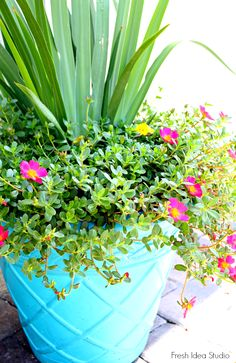 Give your Outdoor Planters a quick update with this DIY tutorial by Fresh Idea Studio #Summer #Porch
