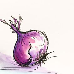 Tracey Fletcher King: Hot Stuff... onion sketch... purple onion... watercolour and ink