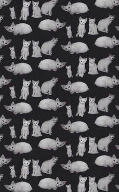 Más gatitos!
