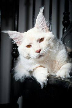 Albino kitty