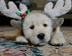 Best Christmas Gift Ever!!
