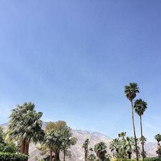 It's always a beautiful day in Palm Springs #coachella #revolvefestival ---- O dia é sempre lindo em Palm Springs!!! Um sábado feliz para todos nos by camilacoelho
