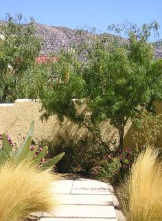Abq NE Heights residence - front courtyard wall, mailbox enclosure with Western Honey Mesquite, Prickly Pear, Mariola (QUERCUS, 1999)