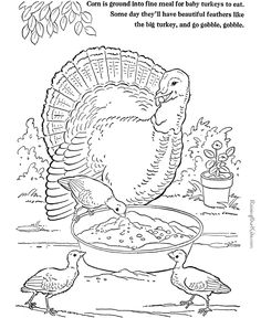 Farm Animal Coloring Page Free Printable Turkey Pages Featuring Hundreds Of Animals Sheets