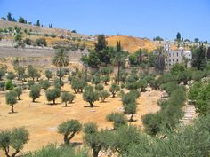 La vallée du Cédron, à Jérusalem (Israël).