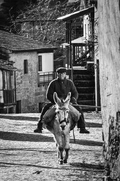 AZéRO: ...de voltando ao passado...   Cardanha, Torre de Moncorvo, janeiro de 2014  | Portugal