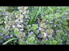 Смотри Какие Цветы Любит Шмель (Pet World. Bumblebee)