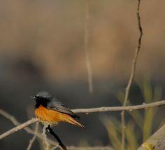 My Birding Trails...: Spring Has Sprung...