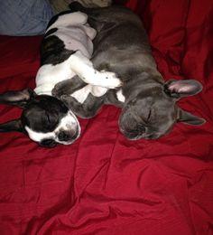 Luna&Pippy taking a nap