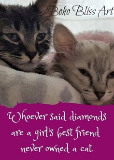 Your Cat's Picture & Your Favorite Quote About Cats Digital Print Dog Quotes Love, Cat Quotes, Feline Leukemia, Cheap Pets, F2 Savannah Cat, Cat With Blue Eyes, Cats Bus, Cat Drinking, Cat Art Print