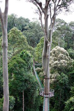 Canopy Walkway, Borneo Rainforest Lodge, Danum, Borneo, Sabah, Malaysia