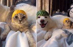 Cats Wearing Fruit Helmets